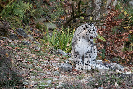 white and black wild cat