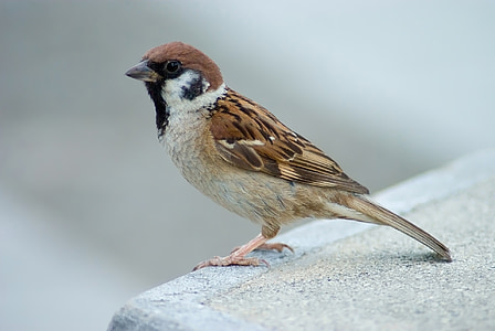 selective focus photography of house sparrow