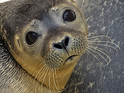 brown sea lion in closeup photography