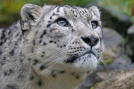 closeup photo photo of cheetah