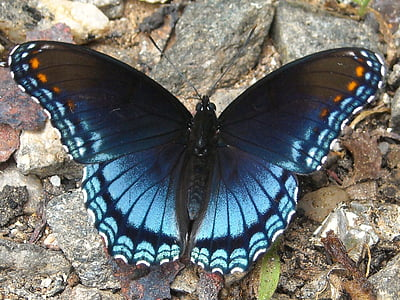 close-up photo of purple spotted butterfly