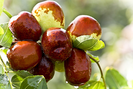 brown fruits on tree