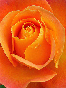 close-up photography of orange flower