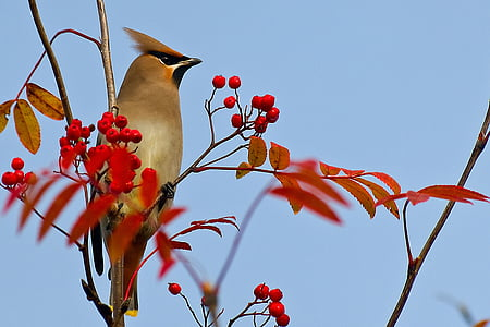 brown bird in the red fruit tree