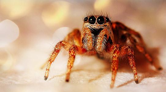 macro shot photography of spider