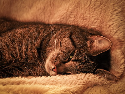 brown tabby cat lying on towel
