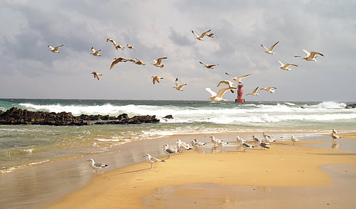 flock of gulls on beach during daytime