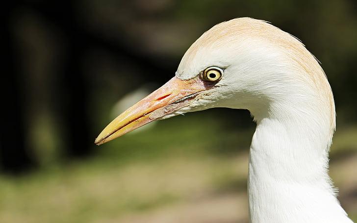 closeup photo of long beaked bird