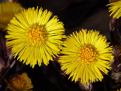 two yellow petaled flowers