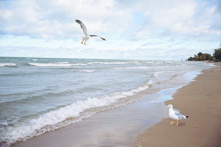 two white-and-gray birds in beach