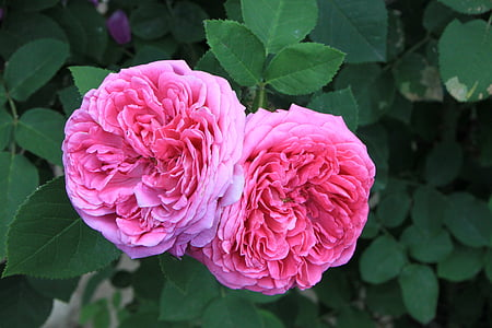 close-up photo of pink petaled flowers in bloom