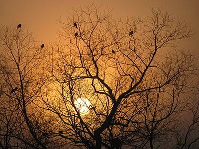 silhoutte of tree under golden hour