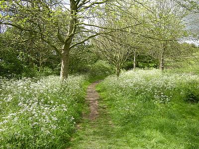 walkway on green plants and tree