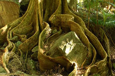 photo of brown rock beside tree