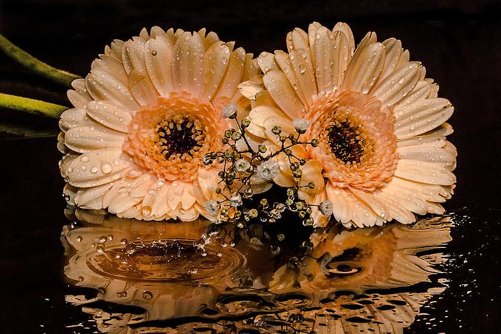 gerbera, gypsophila, flowers, petals, orange, drop of water