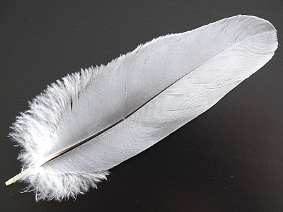 white feather photo