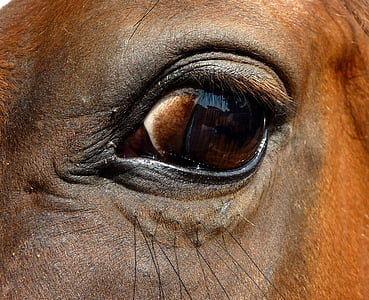 close-up photo of horse eye