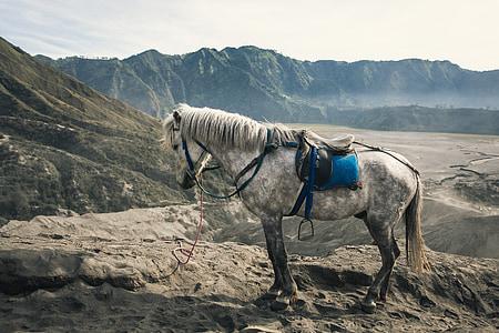 white horse standing on gray mountain