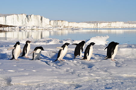 group of penguins on snow near body of water