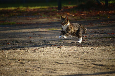 brown and white cat jumping on brown soil