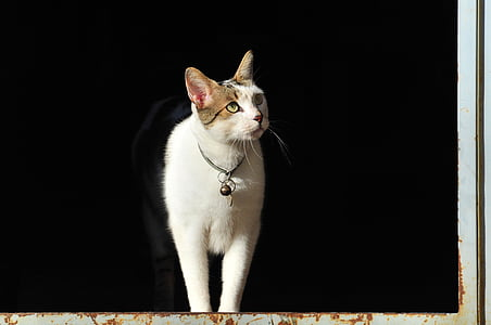 white cat standing on window