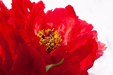 closeup photo of red petaled flower steam
