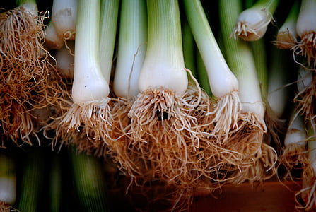 bunch on green string onions