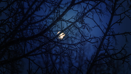 silhouette photo of tree branch during night sky