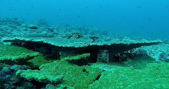 underwater photographyo fgreen corals