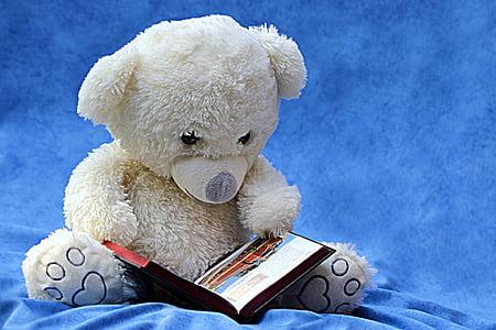 white bear plush toy holding open book