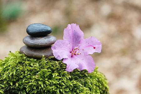 pink azalea flower beside cairn