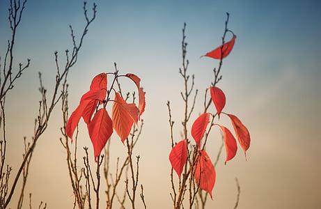 orange leaf plant under blue and white sky