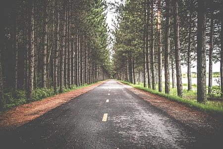 black asphalt road between green trees
