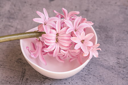 pink flower on white bowl