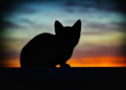 silhouette of cat