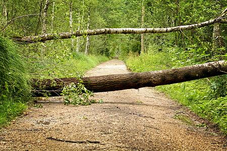 tree branch blocking the pathway