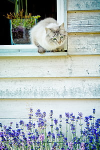 white and gray cat on white wooden window pane