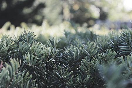 green leaf plants field