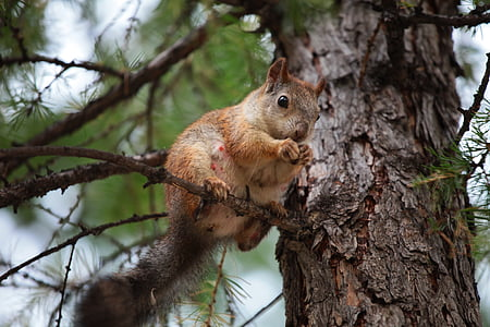 squirrel on tree holding his hands