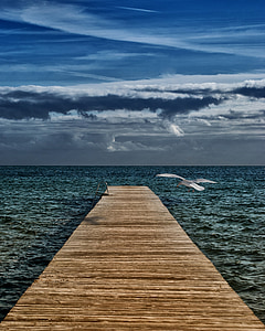 brown wooden dock with seagull flying near it