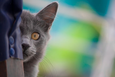macro shot photography of gray cat