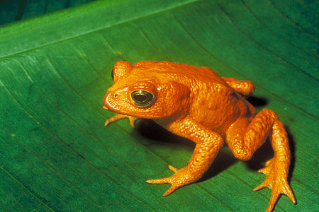 orange frog on green leaf
