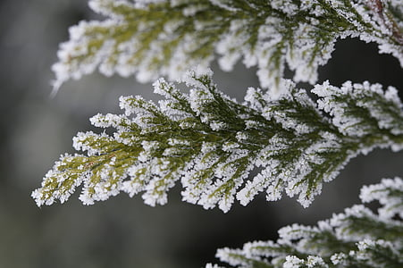 green leafed plant coated with white snow