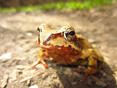 macro photography of brown and beige frog