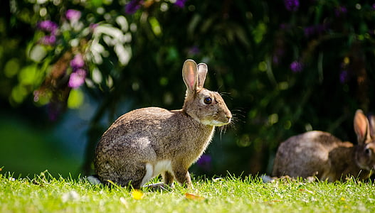 shallow focus photography of grey rabbits during daytime