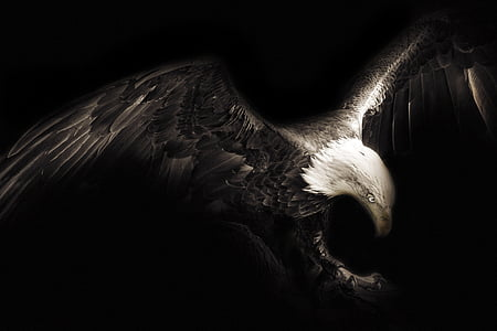 bald eagle digital art in black background