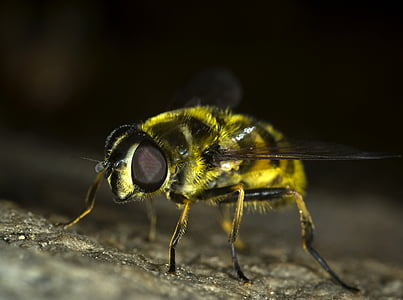 macro photo of yellow bee
