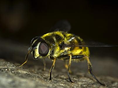 macro photo of yellow bee
