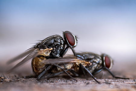 selective focus photography of two flies