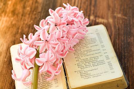 pink cluster flower on book